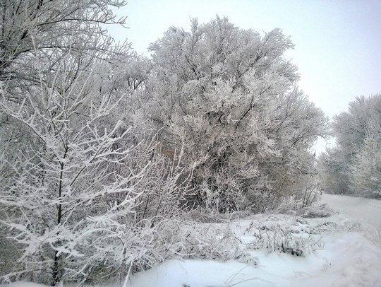 Морозная погода без осадков, но с другими «прелестями»: синоптики рассказали, что сызранцам ждать завтра