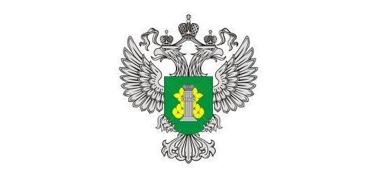 В Самарскую область завезли полтонны зараженной сливы